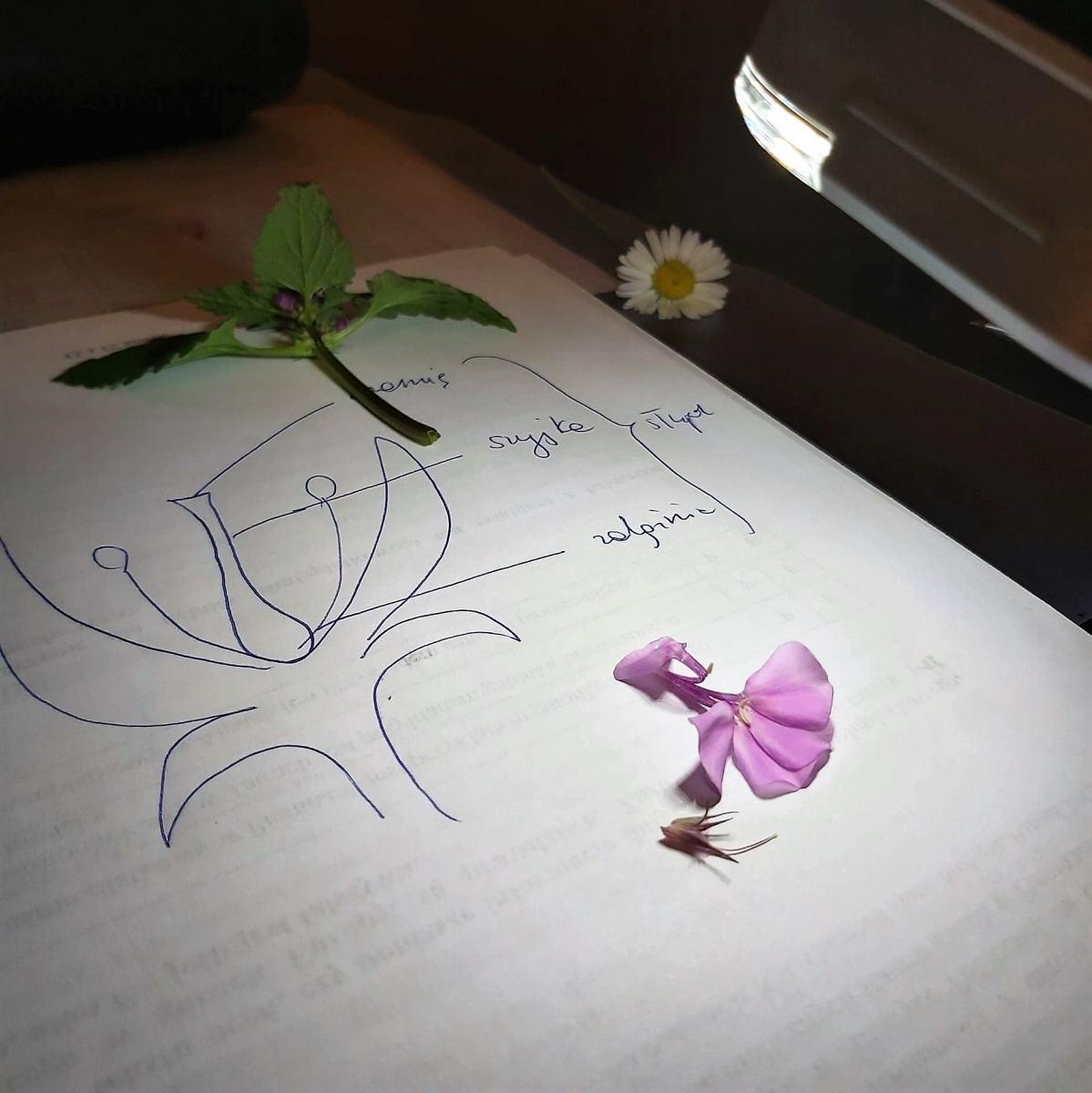 lekcja_kwiaty2